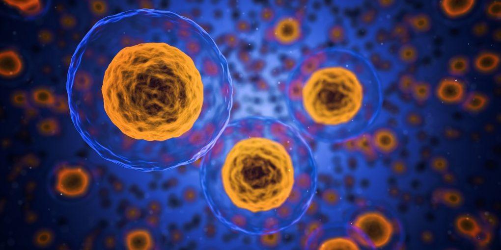 cellule tumorali migranti